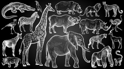 African animals and birds set. Hand drawing sketch white chalk on blackboard. Vector illustration art. Vintage engraving style. Nature objects wild life mammals.Predators and herbivores.