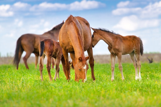Mare and foal grazing in spring pasture