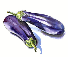 hand drawn watercolor sketch vegetables eggplant