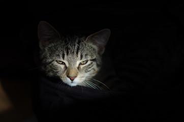 Portrait einer Katze mit schwarzem Hintergrund