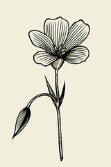 beautiful flower isolated