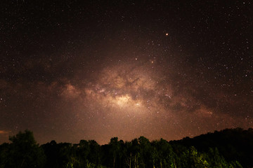 Forest landscape with sky night and milky way