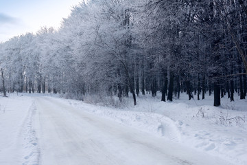 winter forest with the footpath covered by hoarfrost