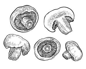 Hand drawn mushrooms. Graphic vector illustration. Organic vegetarian product.