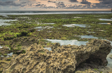 Coral low tide beach