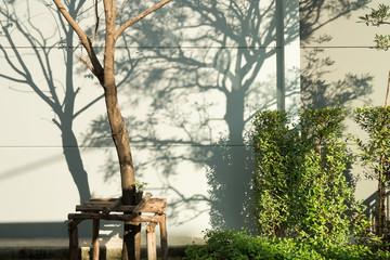 Tree Shadows background.