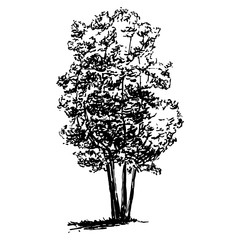 Hand drawn tree sketch, black nature flora illustration, isolated on white background. Realistic silhouette vector design.