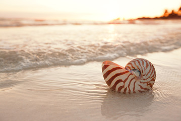 nautilus shell on beach in sunrise light, seascape