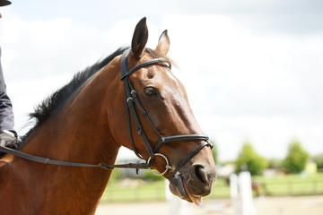 horse wearing bridle
