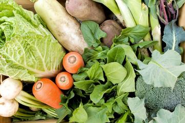 日本の冬野菜セット / Japanese winter vegetables basket