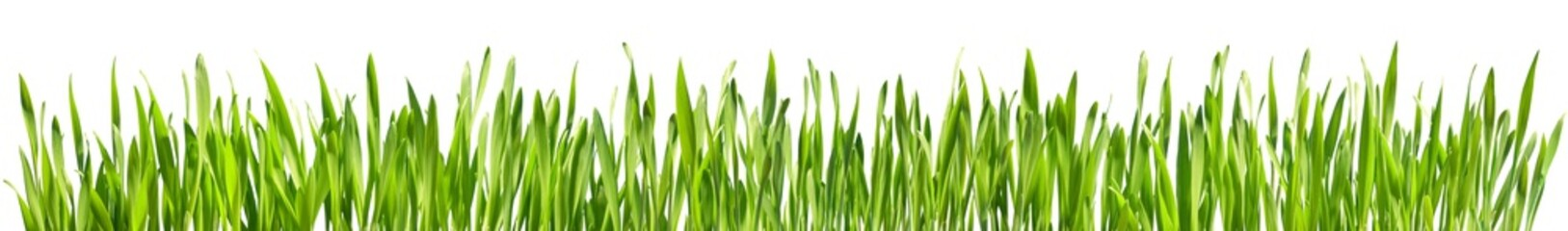 Perfect Grass Isolated - Spring Border