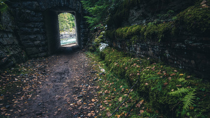 Wall Mural - Moss covered road.