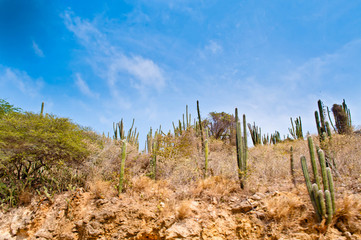 Mountain of cactus, bushes and blue sky