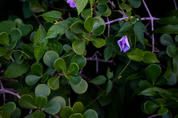 Green leaves purple flower