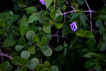 Green leaves purple flower
