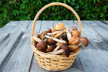 Fresh boletus mushrooms in the basket on wooden table