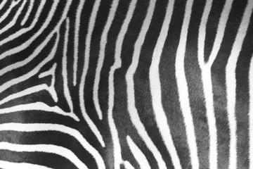 Fotobehang Zebra Zebra Stripes