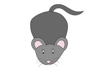 illustration of little grey mouse on white background