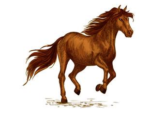 Horse running on sport races vector sketch