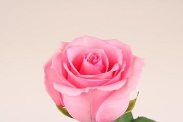 아름다운 꽃과 이벤트소품