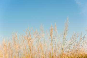 Grass field landscape in nature ,with blue sky