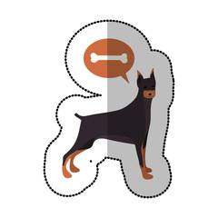 colorful image middle shadow sticker with doberman pinscher dog thinkin bone vector illustration