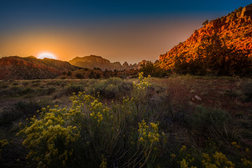 Aluminium Prints Natural Park Zion National Park Fall wild flowers at Sunrise