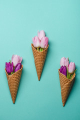 Concept with tulips in cone