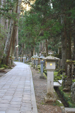 Japanese Graveyard in Forest