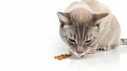 Katze frisst Trockenfutter.