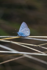 butterfly, a picture it is made in the field, in a native habitat