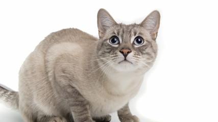 Katze schaut nach oben.