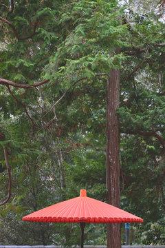 Red Umbrella in Japan