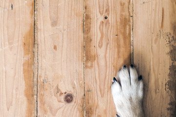 dog feet and legs on wood. Close up image of a paw of homeless dog