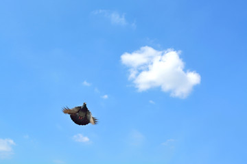 Pigeon fly high into the sky.
