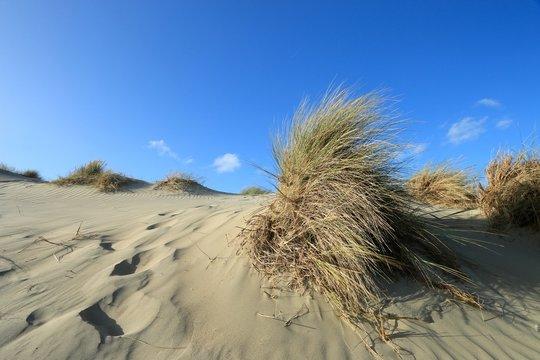 dunes of the Touquet côte d 'Opale , pas de Calais, hauts de France , France