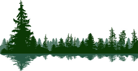 fir trees green forest panorama on white