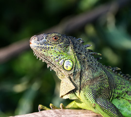 Green lizard standing on tree