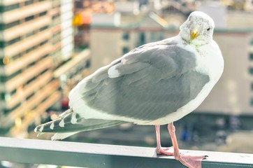 Curious Seagull Perching on a Balcony Railing