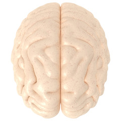 High Resolution 3D real brain