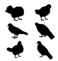Pigeon Silhouette Set