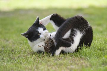 Katze fängt Vogel