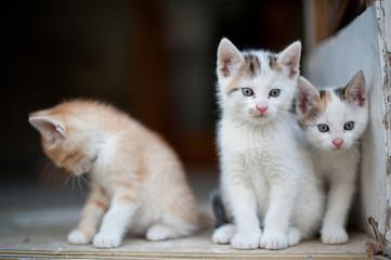 Junge Katzen am Bauernhof