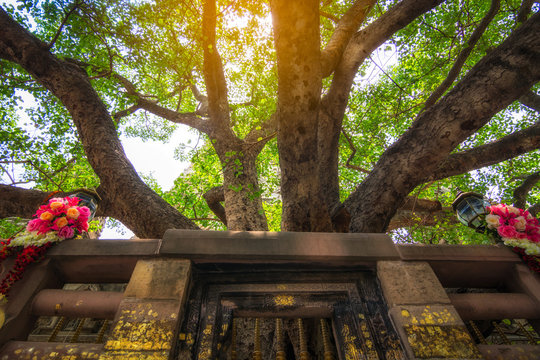 Bodh Gaya is the place where Gautama Buddha is said to have obtained Enlightenment.