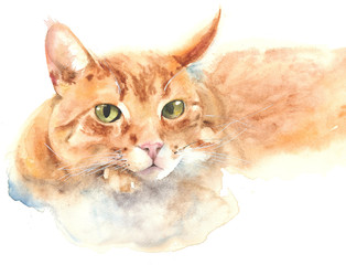 Cat portrait cat resting watercolor painting illustration isolated on white background