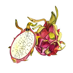 Dragon fruit isolated on white background. Tropical set, Watercolor sketch object