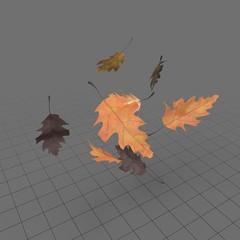 Leaves Oak 01