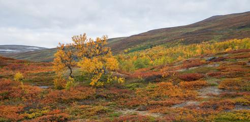 Mountain landscape in northern Sweden. Abisko national park