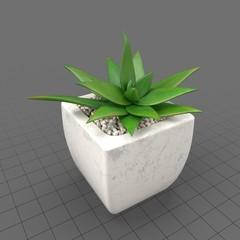 Plant Decor 03