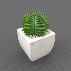 Plant Decor 04